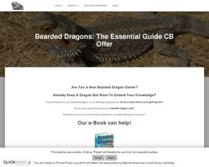 .oO Bearded Dragons: The Essential Guide Oo. » Bearded Dragons Rock